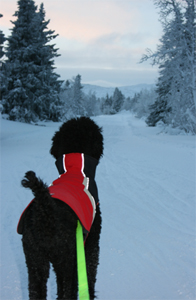 Balder på årets første skitur